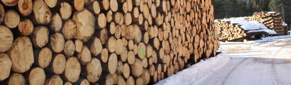Nel febbraio 2014 torna l'asta di legname di pregio trentino