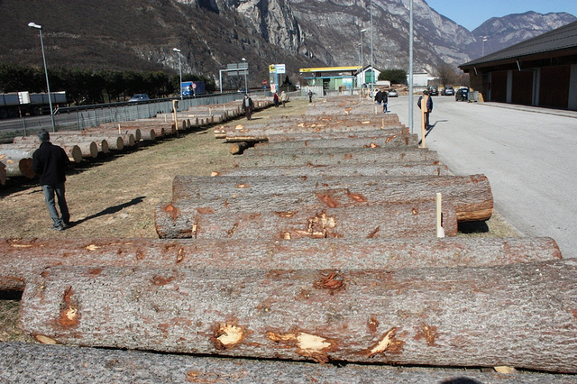 Asta di legname di pregio il 22 febbraio a Trento