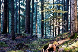 21 marzo giornata internazionale delle foreste