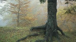 """CONCORSO A PREMI PER SCUOLE SECONDARIE """"DO THE RIGHT THING, SAVE THE FORESTS!"""""""