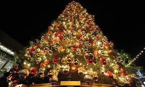 Scegli bene il tuo Albero di Natale!