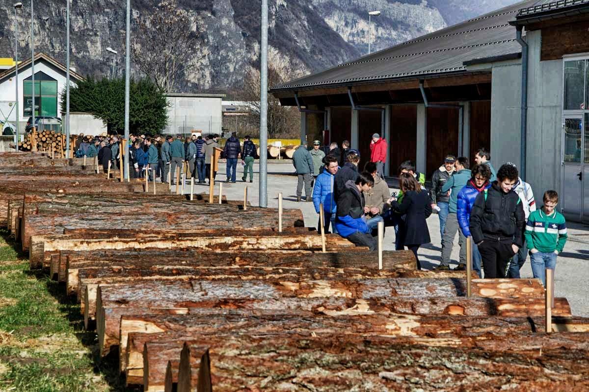 Asta di legname di pregio a Trento: esauriti tutti i lotti certificati PEFC