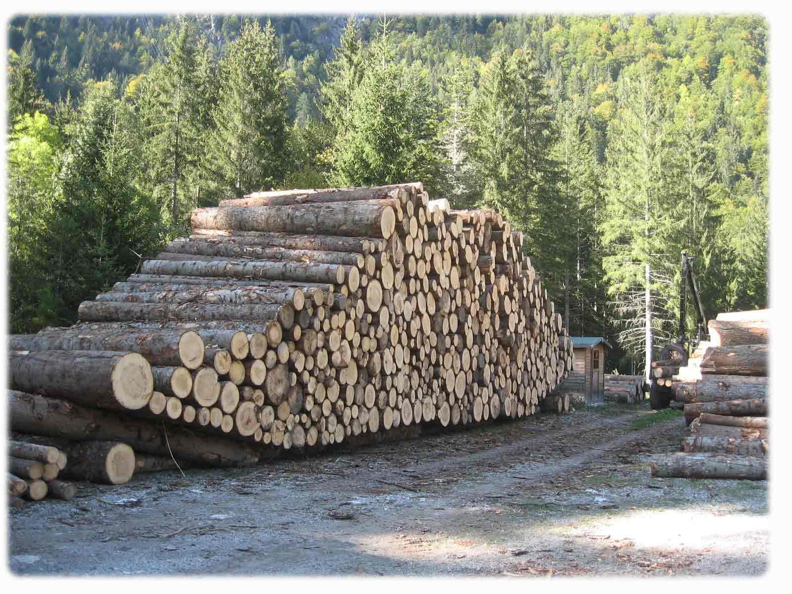Legno Servizi: 1° Asta regionale del legname di pregio