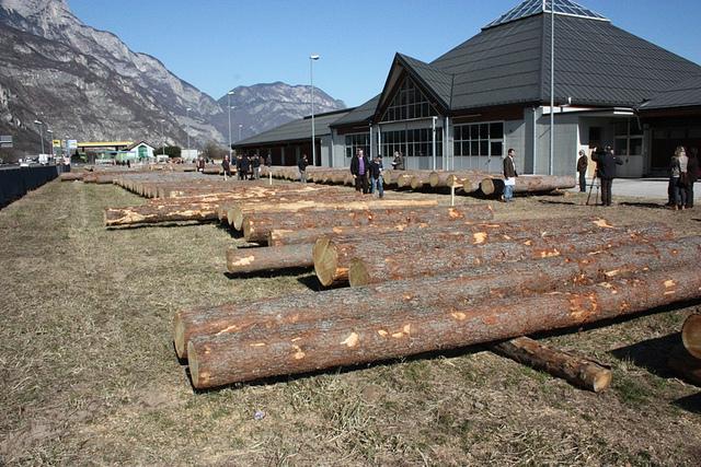 Il 21 Febbraio torna l'asta di legname di pregio trentino