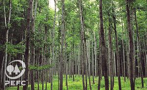 Dal traffico di legname il 18% dei gas serra: investire sulla certificazione aiuta il pianeta