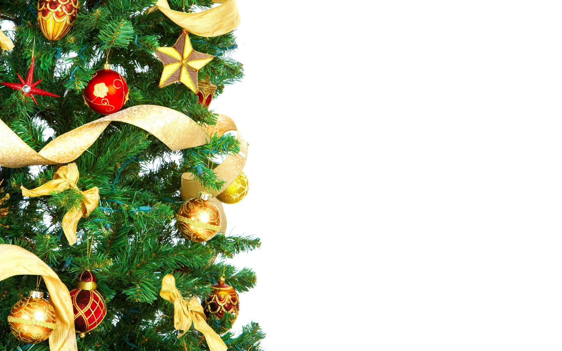 Alberi di Natale 2014 certificati? Eccone alcuni esempi nelle città italiane