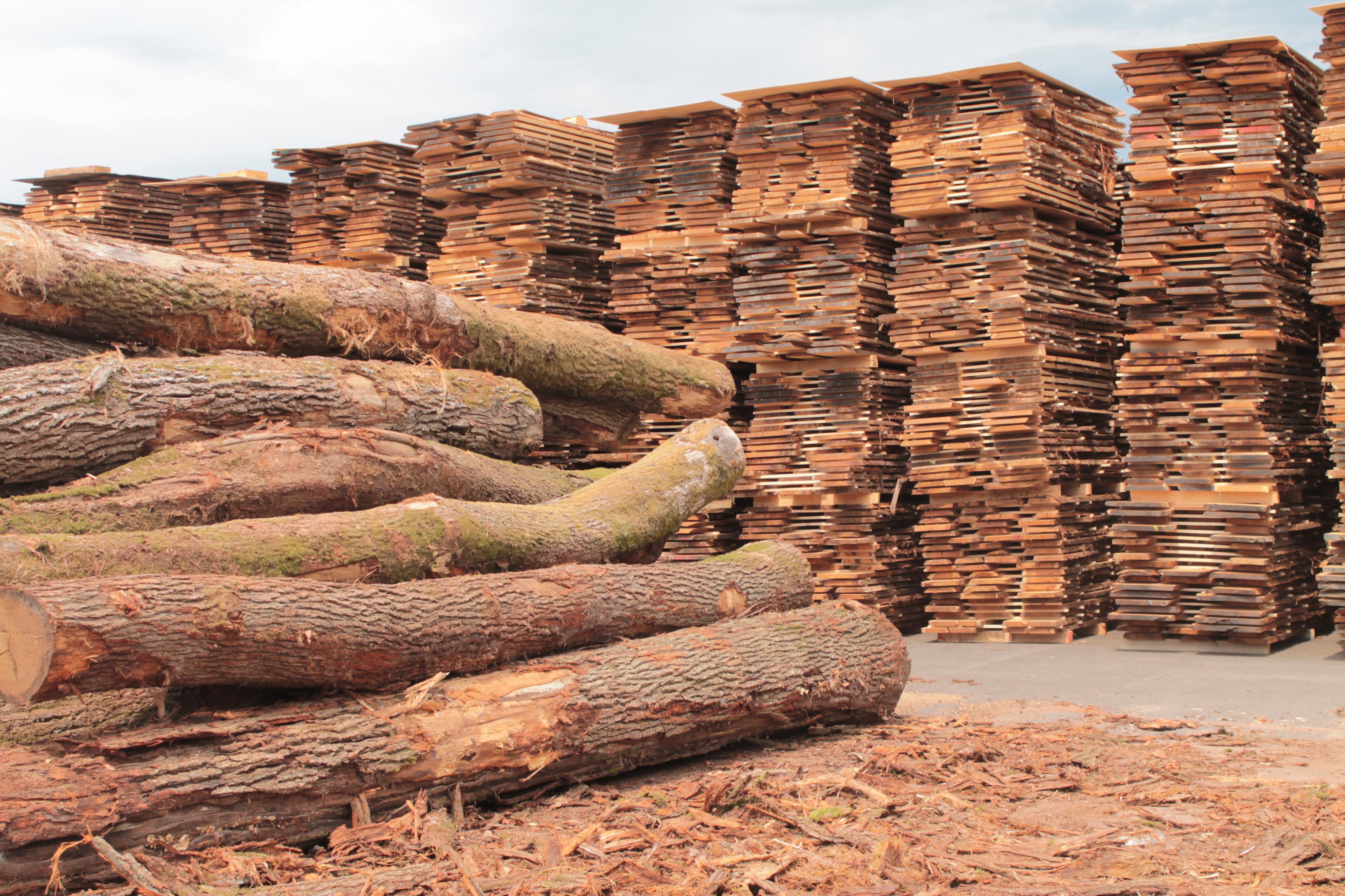 Trentino, gara di vendita di legname PEFC