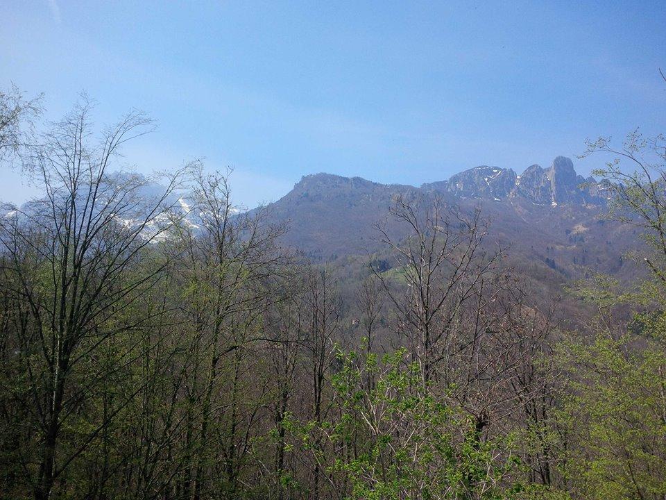 Boschi delle Piccole Dolomiti: la filiera corta è promossa dall'industria del legno!