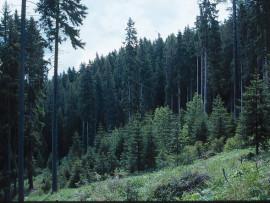 Cruciali ma sottovalutate: un premio per le best practice delle aree collinari e montane