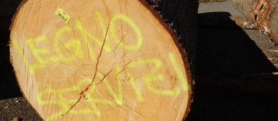 Legno Servizi: crescono i volumi commercializzati e si consolida la filiera del legno certificato