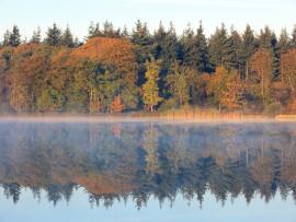 I lati oscuri del mondo forestale: i boschi mondiali luogo di illeciti delle Ecomafie