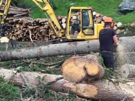 """""""Non si salveranno le foreste senza certificazione e gestione attiva del territorio"""""""