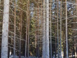 """Lo """"scatto"""" che salva i boschi: PEFC lancia un concorso fotografico"""