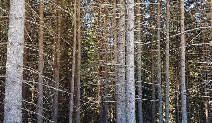 In Piemonte un'asta per la vendita di materiale legnoso certificato