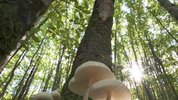 Carta di Bagno di Romagna: Pefc Italia con Legambiente e Slow Food per la Gestione Forestale Sostenibile e Consapevole