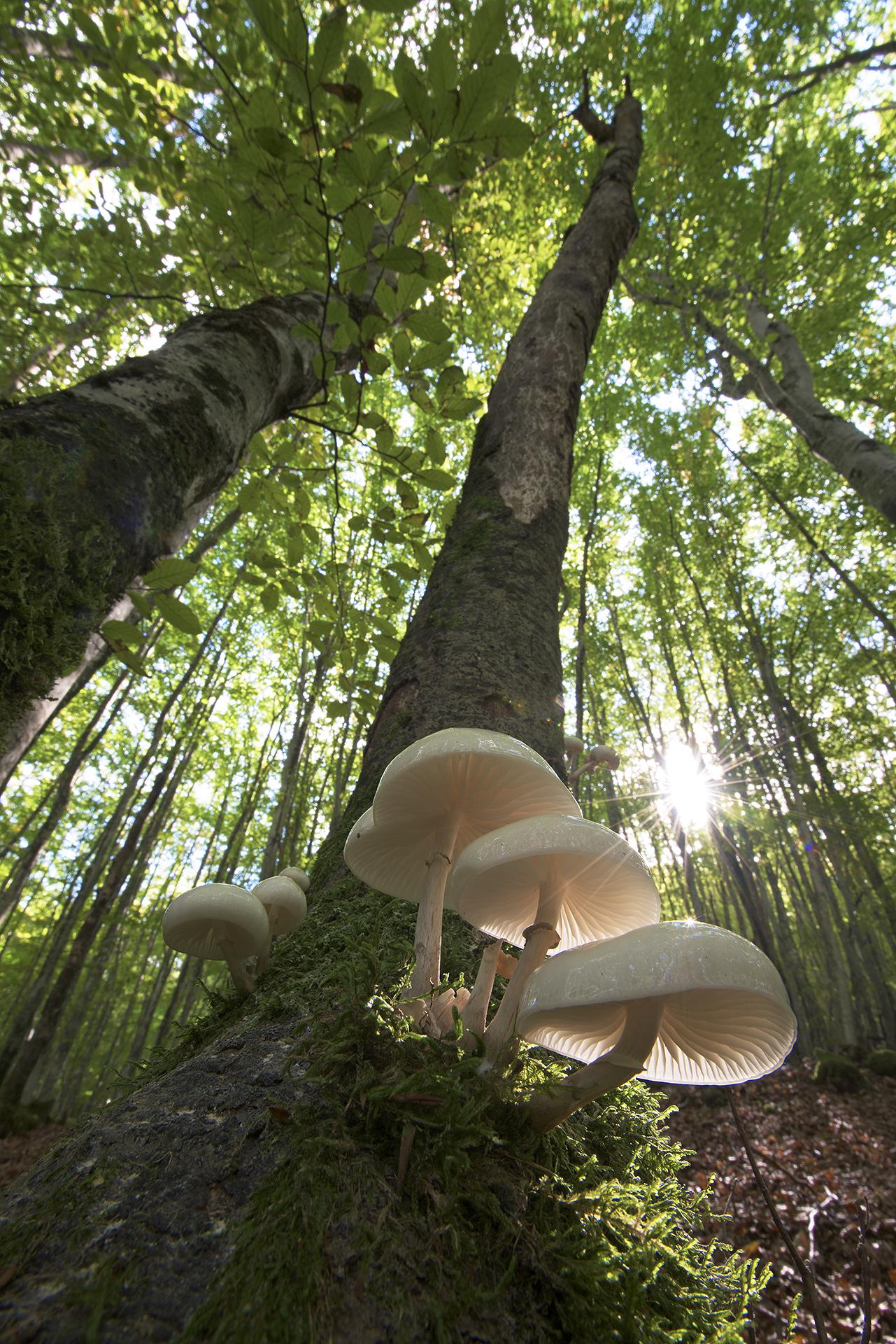 """Approvato dal Consiglio dei Ministri il """"Testo unico in materia di foreste e filiere forestali"""